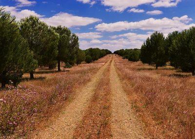 Sesmarias Turismo Rural & Spa Natureza