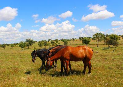 Sesmarias Turismo Rural & Spa