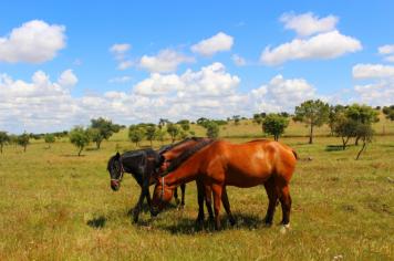 Cavalos na Sesmarias Turismo Rural