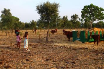 Vaquinhas na Sesmarias Turismo Rural