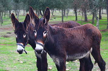 Animais na Herdade Sesmarias Turismo Rural & Spa