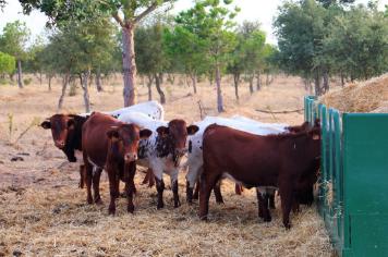 Os animais das Sesmarias Turismo Rural