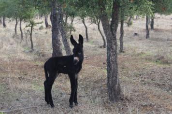 Quinoa o novo bébé da Sesmarias Turismo Rural